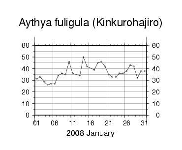Kinkurohajiro200801