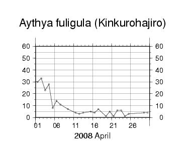 Kinkurohajiro200804