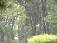 Bsp20080830_toyosumibashi